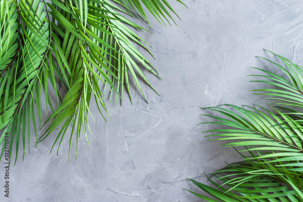 Huge palm leaves on a grey concrete wall background.