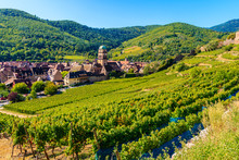 Green Vineyards And View Of Ka...