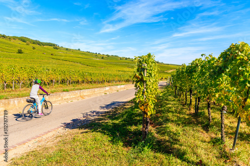 Young woman cycling on road along vineyards to Kaysersberg village, Alsace Wine Canvas Print