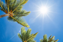 Palm Tree Against Blue Sky Wit...