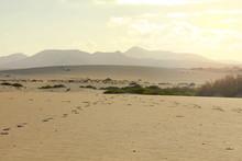 Sand Dunes Near Corralejo With...