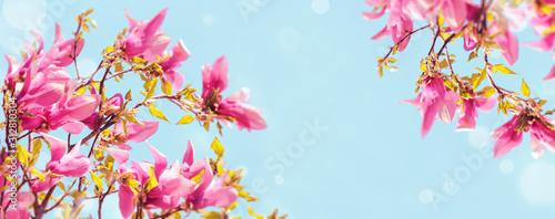 Obraz Magnolia blossom - fototapety do salonu