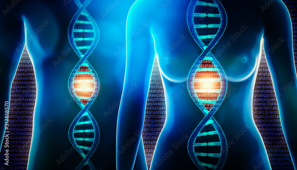 Fototapeta Human dna strands double helix and female and male body 3d rendering illustration. Science, medicine, physiology, genetics, genome, sequencing, biology concepts.