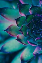Neon Succulent Macro