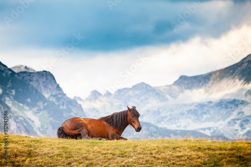 Fotografia Wild horses roaming free on an alpine pasture in the mountains in summer