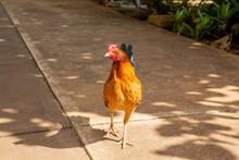 Airport Chicken