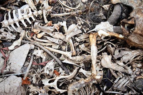 Photo animal bones