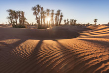 Palms On The Sahara Desert, Me...
