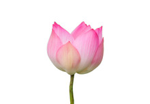 The Pink Lotus Flower In Natur...