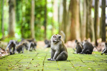 A Long-tailed Macaque Is Sitti...