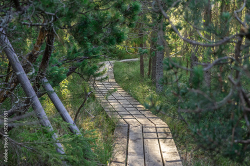 path in the middle of bavarian forest in the national park