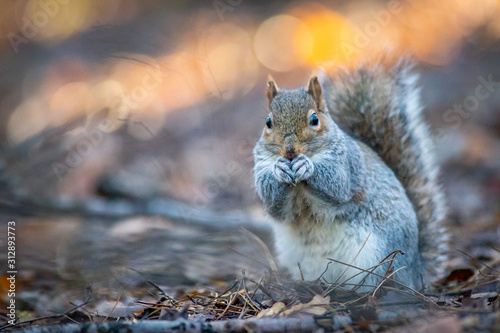 Fotomural squirrel