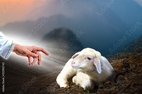 Photo Jesus hand reaching out to a lost sheep
