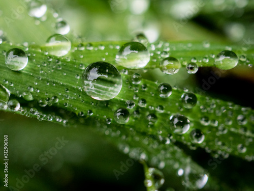 Fotografija  goccioline d'acqua, brina brezza mattutina su erba e prato