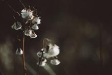 Fragile Autumn Dry Plant With ...