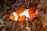 The surprising underwater world of the Indian and Pacifical Oceans