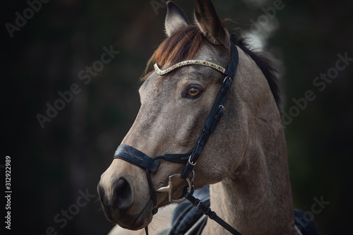 portrait of beautiful stunning show jumping gelding horse with bridle and browba Canvas-taulu
