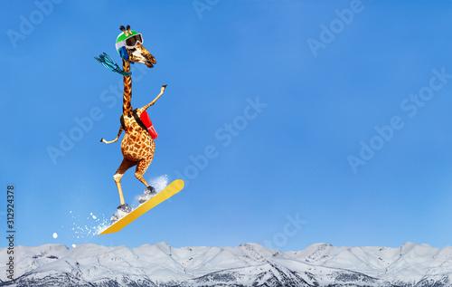Happy giraffe snowboarder jump high over mountains Canvas Print