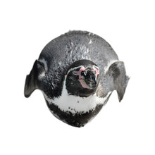 Funny Penguin Lies On His Stom...