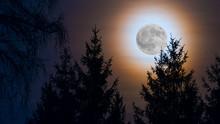 Round Full Moon Rainbow Corona. Moonlight On Dark Night Sky. Orange Moonrise Over Forest. Spruce Tree Top Silhouettes At Evening Dusk. Scenic Skyline In Twilight. Illuminated Natural View In Darkness.