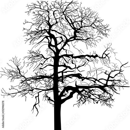 Valokuva high black bare isolated silhouette of tree