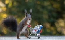 Eichhörnchen Geschenke Einkau.