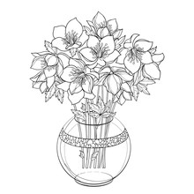 Bouquet With Outline Hellebore Or Helleborus, Bud And Leaf In Round Vase In Black Isolated On White Background.
