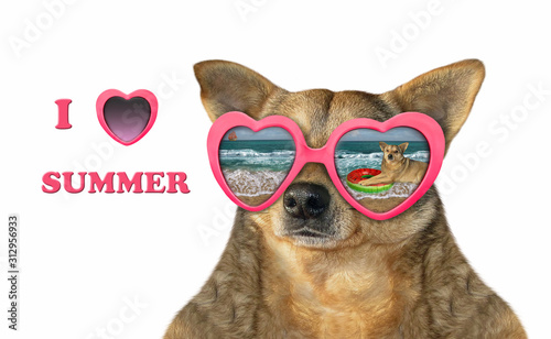 Fototapeta The beige dog wears pink heart shaped sunglasses with the reflection of another dog on a rubber ring on the sea beach. I love summer. White background. Isolated. obraz