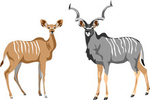 Greater Kudu - Vector Illustration