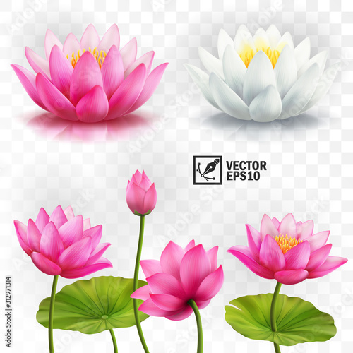 Photographie 3d realistic vector set of white and pink lotus flowers, stems and leaves for ad
