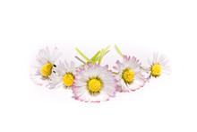 Grupo De 5 Delicadas Flores De...
