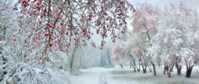 Winter City Park At Snowfall W...
