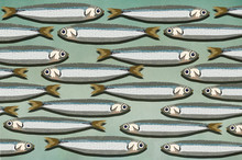 Sardines Background