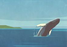 Whale Breaching In Ocean