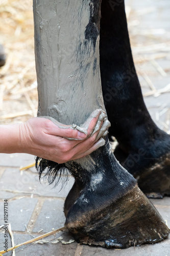 Hand of a woman applying gray alumina clay paste to horse's hind leg as medical treatment against tendinitis (tendon inflammation) after injury Wallpaper Mural