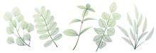 Set Leaves On White. Leaf Vein...
