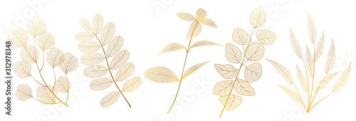 Fototapeta Set leaves on white. Leaf veins.  Vector illustration. EPS 10. obraz