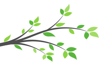Silhouette of a branch with green leaves. Young tree. Spring background concept.