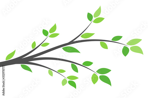 Fototapeta Silhouette of a branch with green leaves. Young tree. Spring background concept. obraz