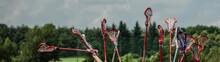 Lacrosse Raised Lacrosse Stick...