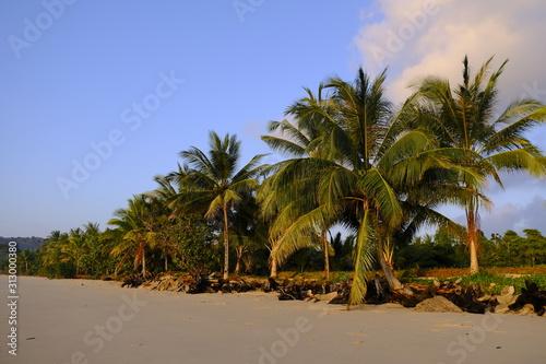 Tropical Palm Trees on a Beach in Thailand