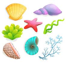 Seashells And Underwater Objec...