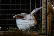 White Rabbit In A Cage At The ...