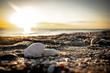 canvas print picture - Florida Ozean Meer Muschel Strand ocean sunset Sonnenuntergang sea water