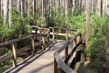 Wooden Walkway Through Wetlands