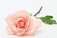 Single Beauty Flower Rose Gold Color Blossom With Heart Shape Isolated On White Background