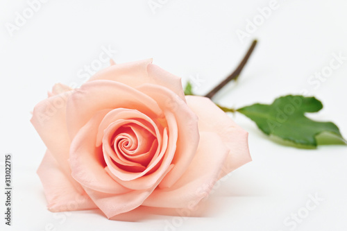 Obraz single beauty flower rose gold color blossom with heart shape isolated on white background - fototapety do salonu
