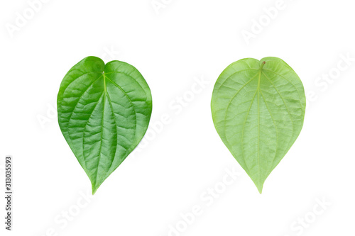 Photo Green betel leaf on the white background.