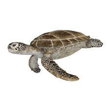 3d Rendered Green Sea Turtle I...