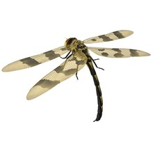 3d Rendered Halloween Pennant Dragonfly